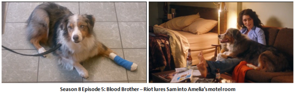 Blood Brother - Riot lures Sam to Amelia